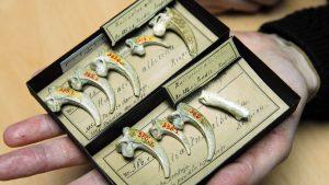 bijoux de néanderthal